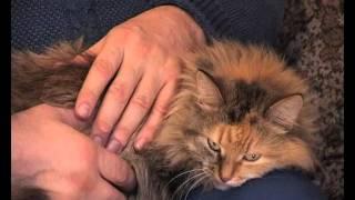 ФЕЛИНОТЕРАПИЯ: КОШКИ-ЦЕЛИТЕЛИ / HEALER CATS(О том, как кошки лечат людей в интересной беседе с Александром Медведевым, специалистом по биоэнергетике., 2012-02-08T14:00:29.000Z)
