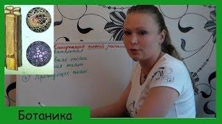 Урок биологии №7. Классификация растительных тканей.