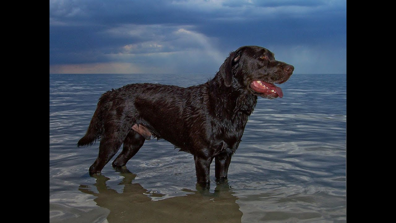 Best Black Dog Swimming In The Sea