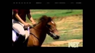 Gotland Pony - endangered breed documentary - Kentucky Life TV