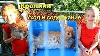 Как ухаживать за декоративными кроликами Первые покупки кролика