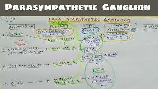Parasympathetic Ganglion - 1 - Ciliary , Sphenopalatine , Submandibular , Otic Ganglion