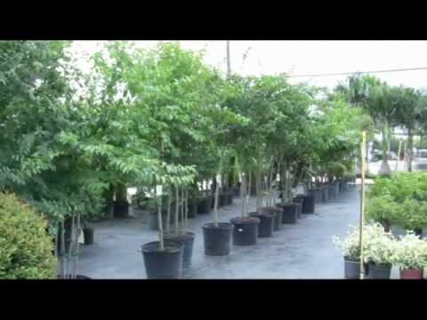 The Plant Stop Garden Center Land O Lakes Florida 813 428-5922