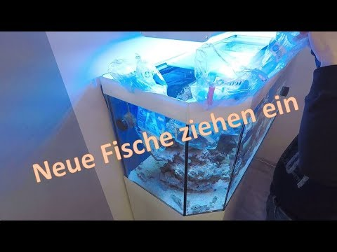 meerwasseraquarium einrichten neue fische ziehen ein youtube. Black Bedroom Furniture Sets. Home Design Ideas