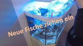 Meerwasseraquarium einrichten neue Fische ziehen ein