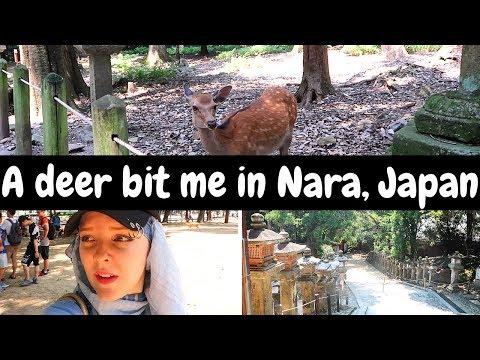 A deer bit me in Nara, Japan