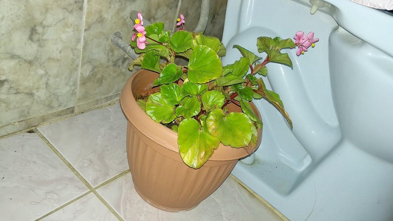 Plantas en el ba o una selecci n de 4 plantas para decorar tu ba o youtube - Plantas en el bano ...