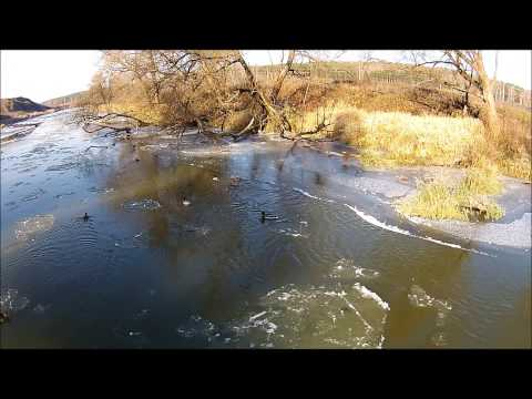 Утки с квадрокоптера