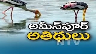 Two Hundred Varieties Of Migrating Birds Reaches Ameenpur Lake Hyde...