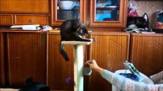Когтеточка для кота (сделана своими руками)