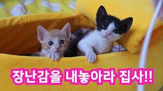 SUB/ 장난감에 푹빠진 아기고양이 카레, 레오의 사냥…