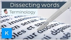 How dissecting words can help you be a pro in anatomical terminology | Kenhub
