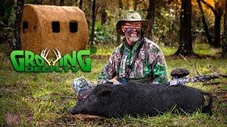 Bow Hunting! Prime PIG HUNT in South Florida:  (#329) @GrowingDeer.tv