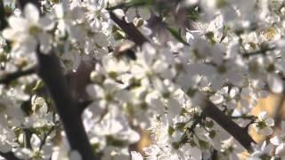 Майский мед(Майский мед., 2015-04-11T07:38:51.000Z)