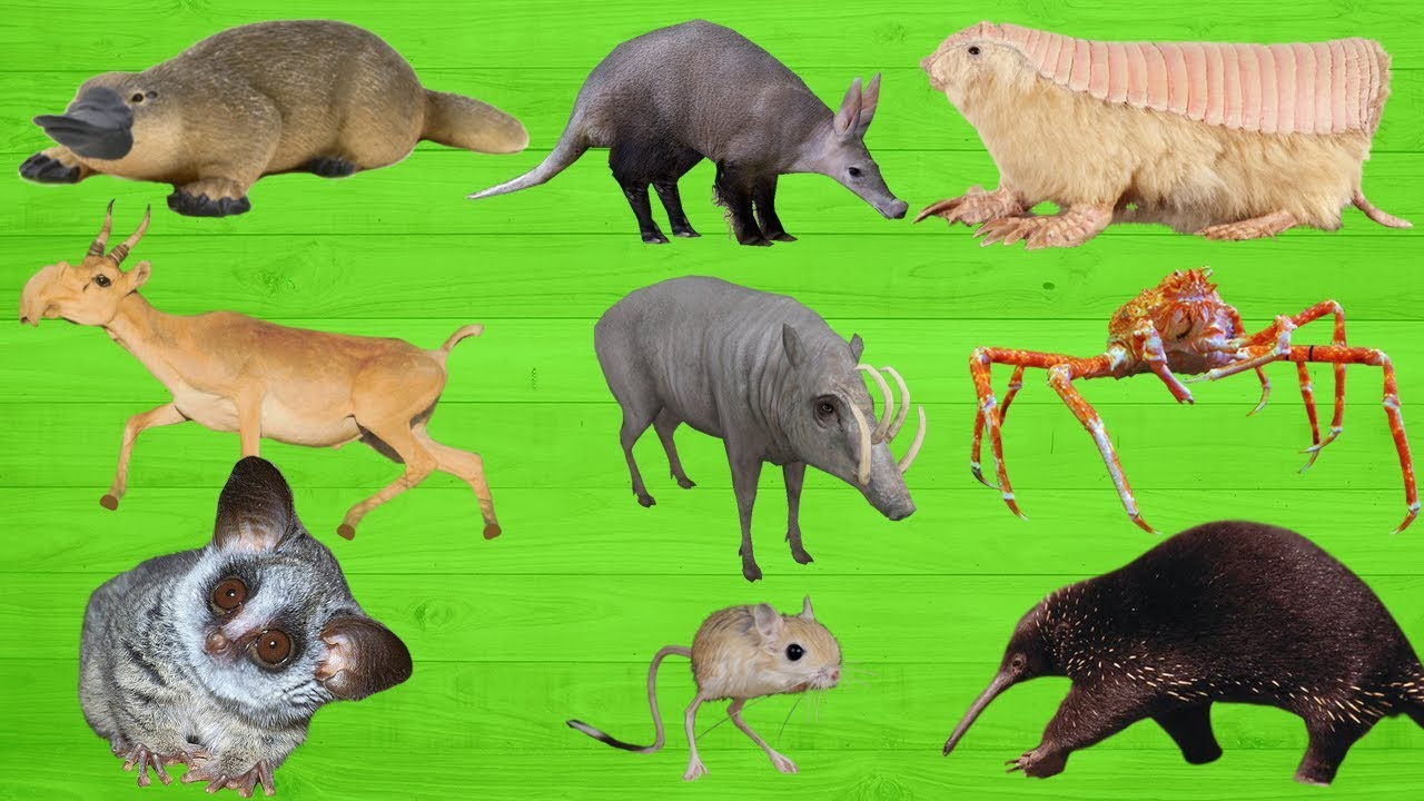 Weird Animals For Kids 1