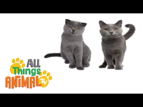 CATS | Animals for children. Kids Videos. Preschool Learning.