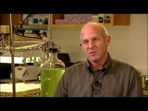 Algae Biofuels and Biotech - Stephen Mayfield UC San Diego
