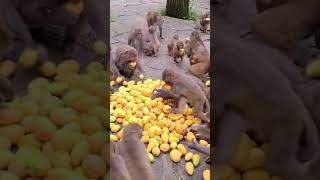 Happy Eating Fruits With Family