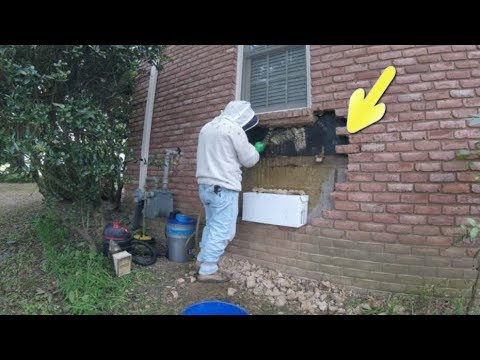 Man Removing Bricks Discovers A Huge Hidden Surprise Behind Them