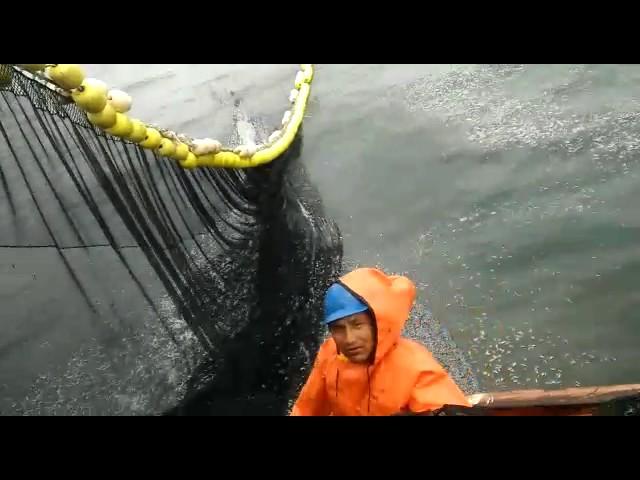 Pescadores exigirán interpelar a Ministro Guiffra por exterminio de Anchoveta peladilla