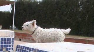 La Laguna Hotel Mascotas Leo West Highland White Terrier