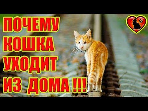 7 причин, почему кошка уходит из дома!