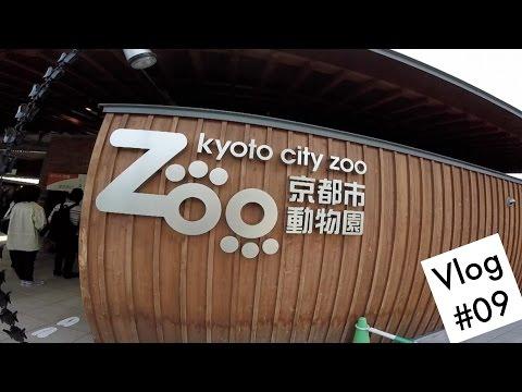 Vlog #09 Enquanto isso no Kyoto City Zoo
