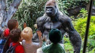 هجوم الحيوانات المفترسه على البشر من خلف الزجاج الحاجز ? مضحك جداً