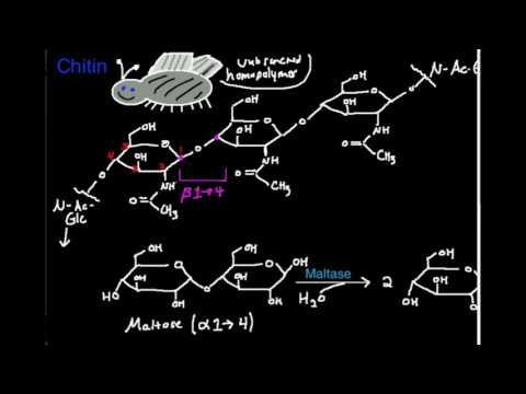 Polysaccharides: Chitin