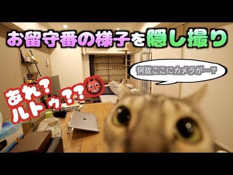ルトロゼの悪事が判明したお留守番動画【ほぼノーカット】