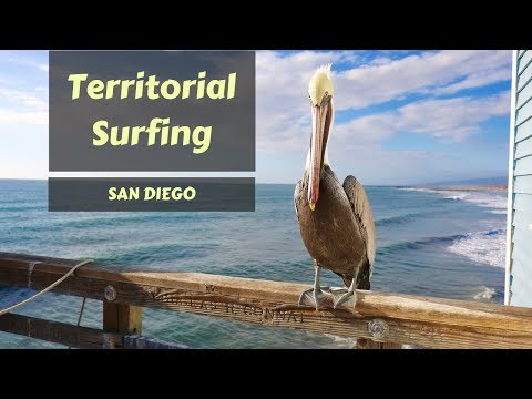Territorial Surfing In San Diego