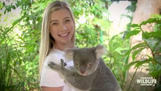 Koala Photo | Currumbin Wildlife Sanctuary