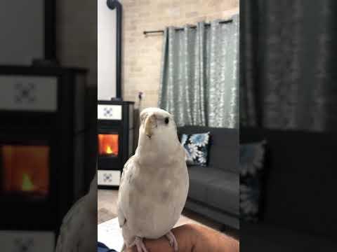 Don't worry be Happy beauty bird