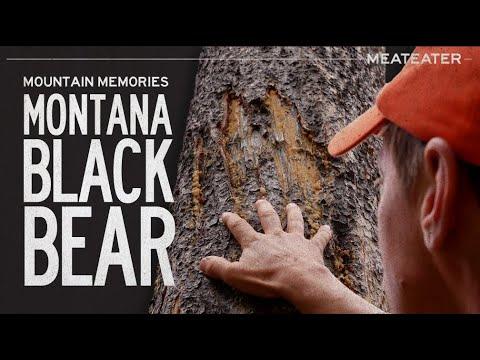 Download Mountain Memories: Montana Black Bear   S6E15   MeatEater