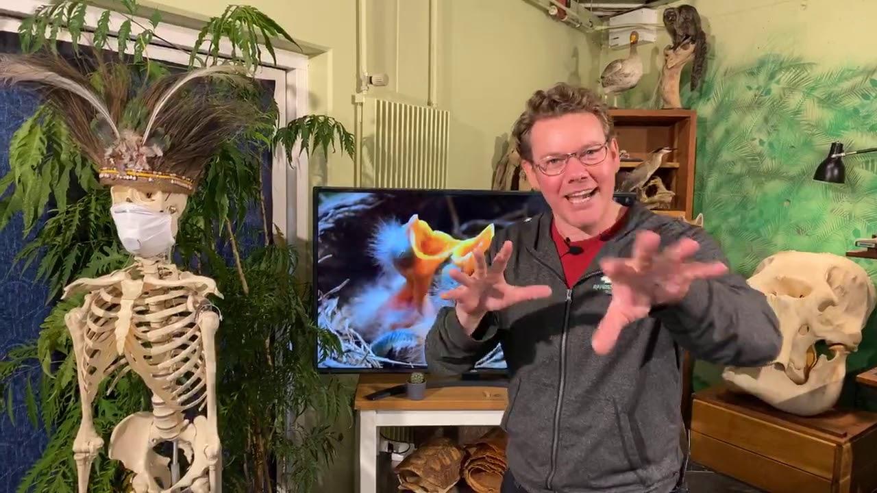 SNAK: Biologiundervisning fra Randers Regnskovs skoletjeneste