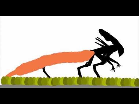 Xenomorph Life Cycle (Predalien An Queen)