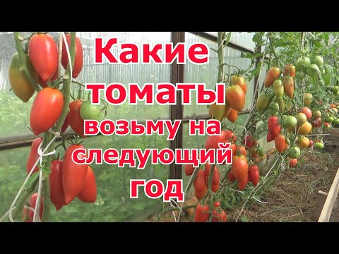 Понравившиеся томаты сезона 2019, и томаты которые не возьму в 2020 год. Сорта и гибриды помидоров. | следующий | открытого | теплицы | выбрать | томаты | грунта | какие | как | для | год