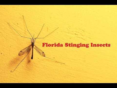 Florida Stinging Insects | What Types of Bugs Sting/ Bite in Florida