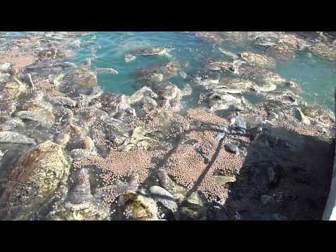 Help World Animal Protection Stop Sea Turtle Farming at the Cayman Turtle Centre