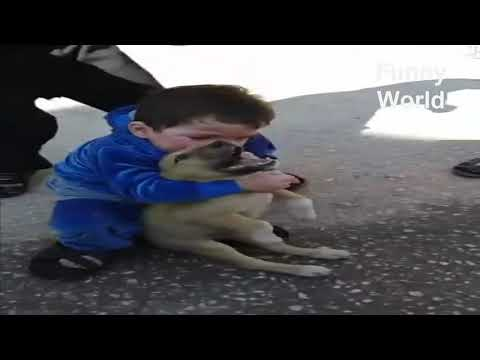 Funny Babby biting Puppy ll very funny