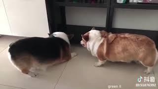 Смешные Приколы про Животных №125 | greenli