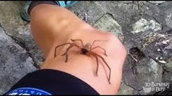 Australian Navy Seal Attacked By GMO Brown Recluse Spider. Real or fake?