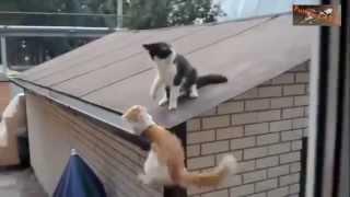 قطط تلعب مع اصحابها  أفضل مقاطع القطط