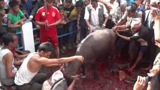 Gulmi Purkot Myalpokhari Dashin video