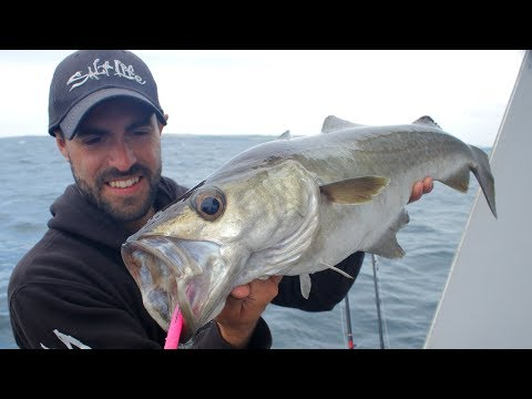 SO MANY FISH!! Epic Reef & Wreck Fishing with Lures!!