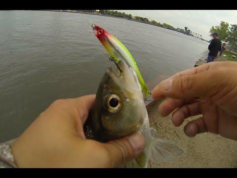 White Bass Fishing Fox River Oshkosh
