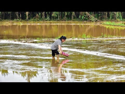 شاهد: أمطار الصين الموسمية مستمرة ورفع التحذير للون الأحمر في تونغلو…  - نشر قبل 2 ساعة