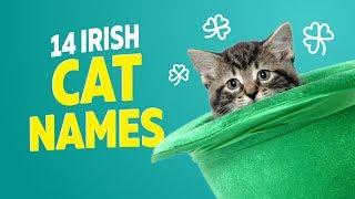 14 Irish Cat Names