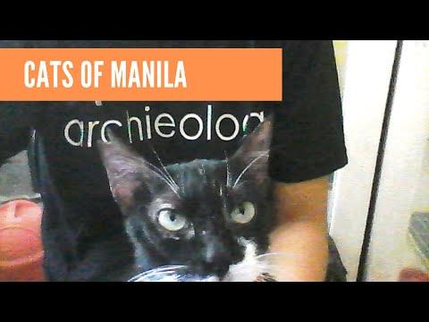 Manila Cats!