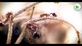 Fire Ants - Die unbesiegbare Armee - Natur Doku in voller Länge I Dokumentarfilm Tiere HD 2018